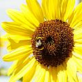 Bee by Les Cunliffe
