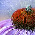 Beetlemania by Juli Scalzi
