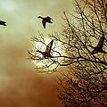 Before A Winter Sky by Bob Orsillo