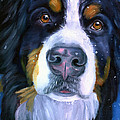 Bernese Mountain Dog In Snowfall by Lyn Cook
