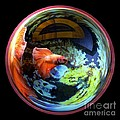 Betta Bowl Poster by Renee Trenholm
