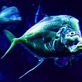 Big Fish Small Fish - Electric by Wingsdomain Art and Photography
