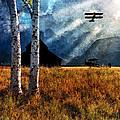 Birch Trees And Biplanes  by Bob Orsillo