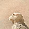Bird Of Prey.. by A Rey