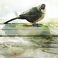 Bird On The Deck by Artist and Photographer Laura Wrede