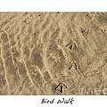 Bird Walk by Artist and Photographer Laura Wrede
