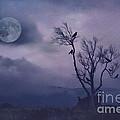 Birds In The Night by Darren Fisher
