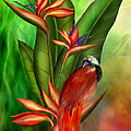 Birds Of Paradise by Carol Cavalaris