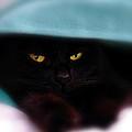 Black Cat Secrets by Bob Orsillo