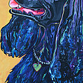 Black Cocker Spaniel by Patti Schermerhorn