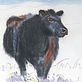 Black Cow Drawing by Mike Jory