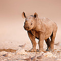 Black Rhinoceros Baby by Johan Swanepoel