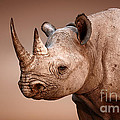 Black Rhinoceros Portrait by Johan Swanepoel