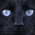 Blackie Blue by Elizabeth Sullivan