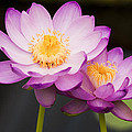 Blooming Violet  by Naushad  Waheed