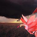 Blooms Against Tornado