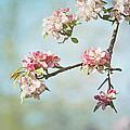 Blossom Branch by Kim Hojnacki