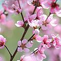 Blossoming Hillside by Melanie Moraga