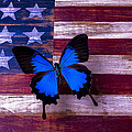 Blue Butterfly On American Flag by Garry Gay