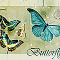 Blue Butterfly - S55c01 by Variance Collections