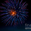 Blue Firework Flower by Robert Bales