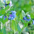 Blue Flower Study