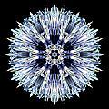 Blue Globe Thistle Flower Mandala by David J Bookbinder