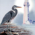 Blue Heron In The Circle Of Light by Gina Femrite