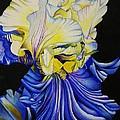 Blue Magic by Bruce Bley
