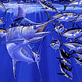 Blue Marlin Round Up Off0031 by Carey Chen