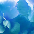 Blue Melody Begonia Floral by Jennie Marie Schell