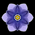 Blue Pansy I Flower Mandala by David J Bookbinder