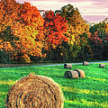 Blue Ridge - Fall Colors Autumn Colorful Trees And Hay Bales II by Dan Carmichael