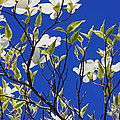 Blue Sky Art Prints ...