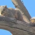 Blue Sky Squirrel