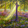 Bluebell Woods by Ann Marie Bone