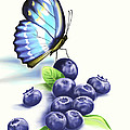 Blueberries and Butterfly