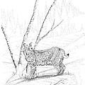 Bobcat by Carl Genovese