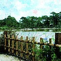 Boca Morikami Gardens by Florene Welebny