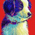 Border Collie Puppy by Jane Schnetlage