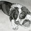 Border Collie Puppy by Sarah Batalka