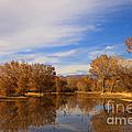 Bosque Del Apache Reflections by Mike  Dawson