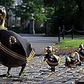 Boston Bruins Ducklings Print by Juergen Roth