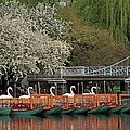 Boston Swan Boats  by Juergen Roth