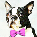 Boston Terrier Art - The Nervous Groom Print by Sharon Cummings