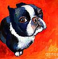 Boston Terrier dog painting prints Print by Svetlana Novikova