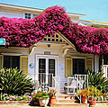 Bougainvillea House by Cheryl Young