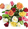Bouquet of roses from above Print by Elena Elisseeva