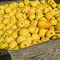 Box Of Golden Apples by Garry Gay