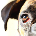 Boxer's Eye by Jana Behr